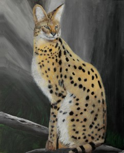 Napolean the African Serval